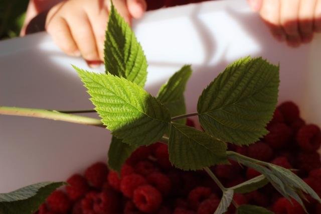 berries in basket